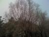 image-2009122160028